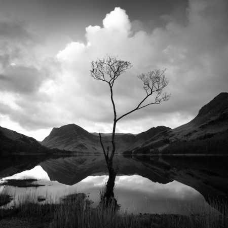 Treescapes of Cumbria