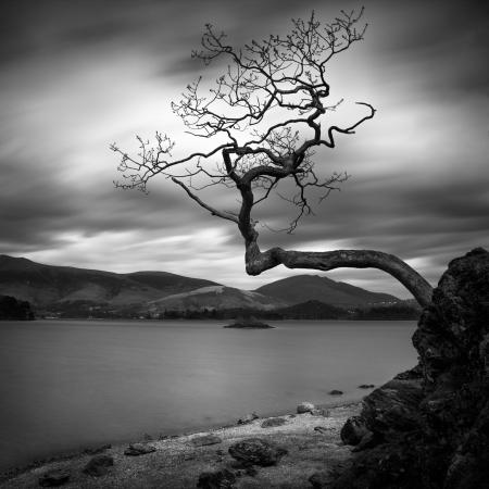 Right-angled tree-