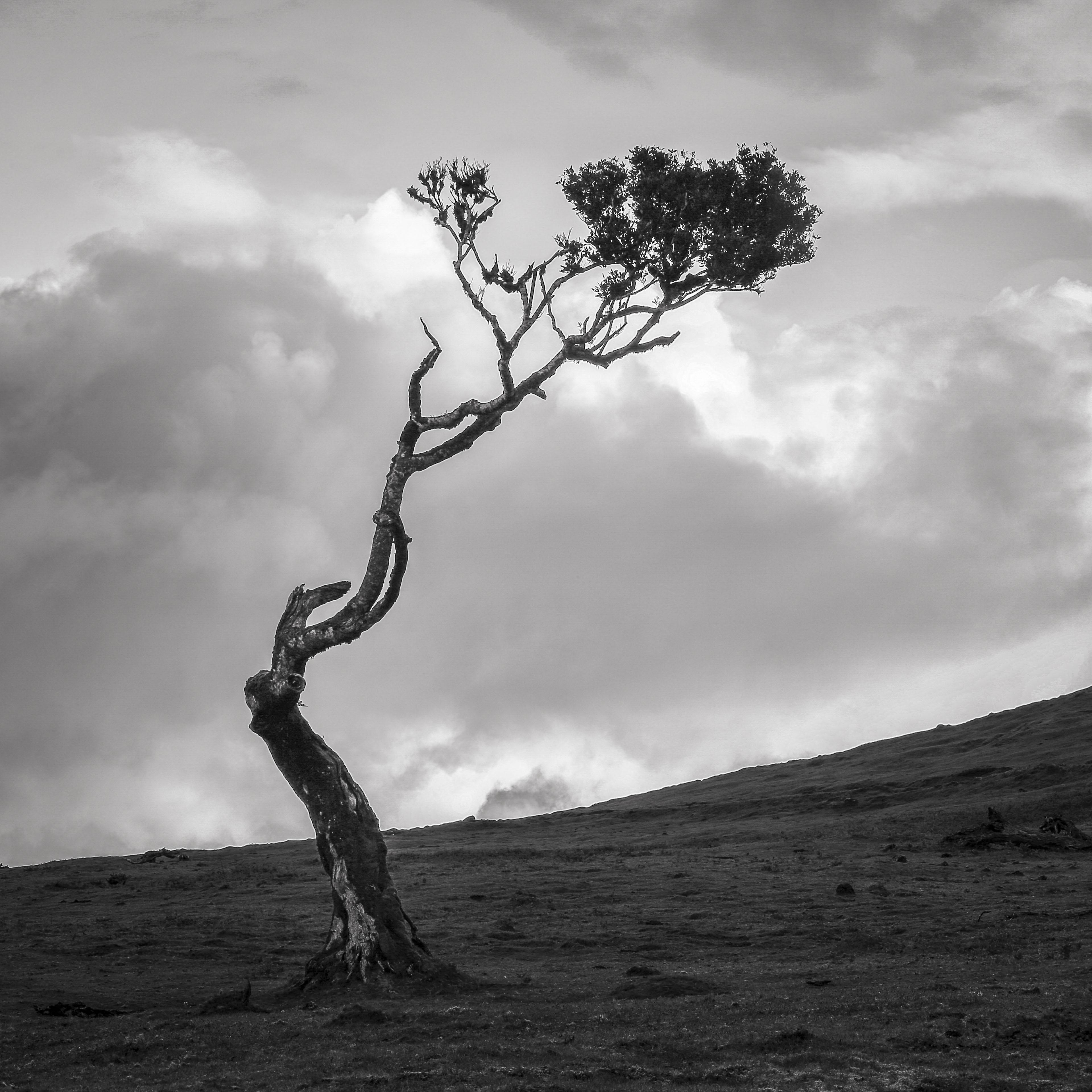 Stinkwood-tree-VI