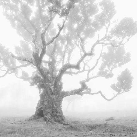 Stinkwood-tree-IV