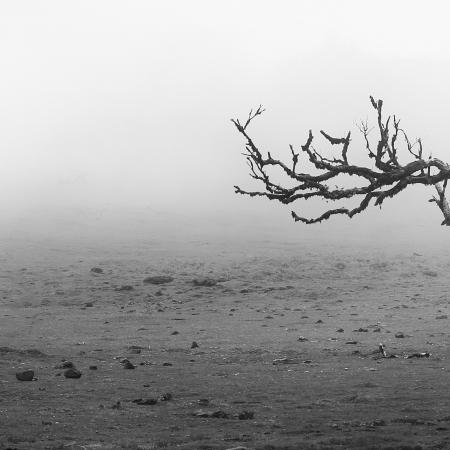 Stinkwood-tree-VIII
