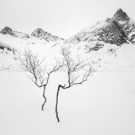 Troms3