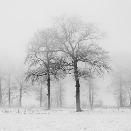 Winter / Scherpenzeel