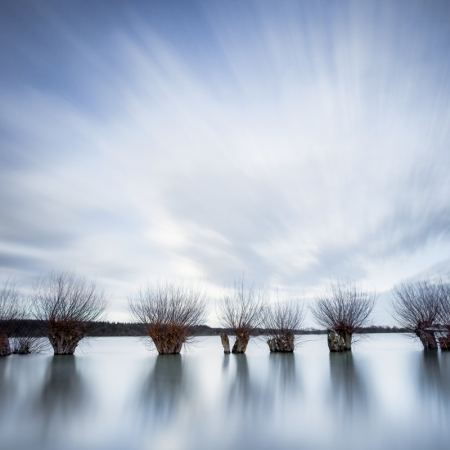 Willow-branches-in-blue